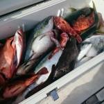 釣った魚は「野菜室」に入れて保存してもいいのか?